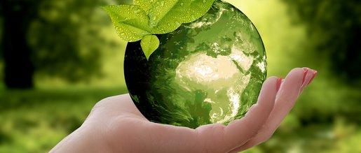 Sustentabilidade: Uma questão humana e psicossomática